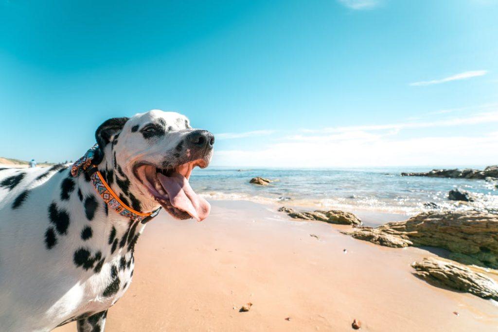 Urlaub mit hund sardinien erfahrungen