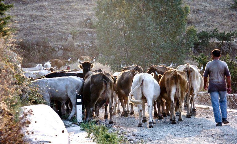 Farmhouses in Sardinia Sardinia Natour