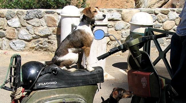 Erfahrungen hund urlaub mit sardinien Urlaub mit